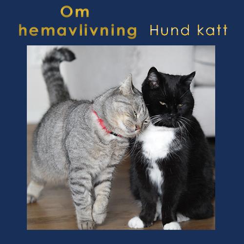 Veterinär för hund, katt och häst i skåne som gör hembesök och hemavlivning bla.